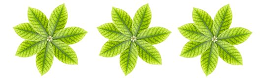 Leaves a white background Stock Photos