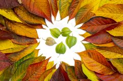 Multicolored leaves, physalis on white background. Flat lay, top view. Autumn still life stock photography