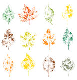 leaves on white background stock illustration