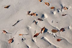 Leaves on a White Sandy Beach. Frazer Island. Stock Photography