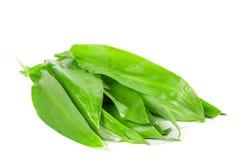 Leaves of wild garlic Royalty Free Stock Photo