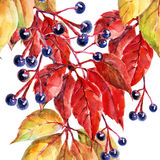 Leaves of wild grapes, watercolor,pattern on a white background, seamless Royalty Free Stock Photo
