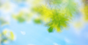 Leaves on the wind - blurred (de-focus) Royalty Free Stock Photography