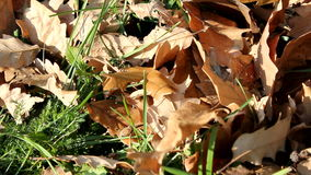 Leaves on Wind stock video