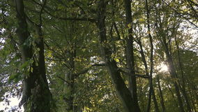 Leaves in the wind, the sun and the woods stock footage
