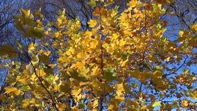 Leaves wind sway stock video