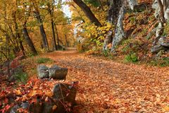 Leaves on Winding Road Royalty Free Stock Photography
