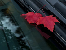 Leaves on the windshield Royalty Free Stock Images