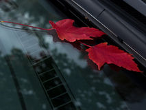 Leaves on the windshield Royalty Free Stock Photo