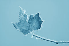 Free Leaves With Frost In Winter Stock Image - 26506591