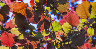 Leaves in wonderful morning light Royalty Free Stock Photos