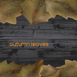 Leaves on wood Stock Photo