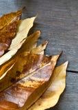Leaves on wood background Stock Image