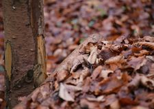 Leaves And Wood Royalty Free Stock Photos