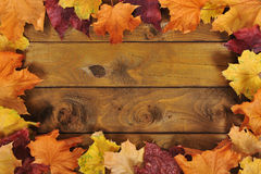 Leaves on wood Royalty Free Stock Image