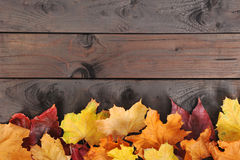 Leaves on wood Royalty Free Stock Photo