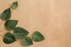 Leaves, wood, texture, leaf green, brown ground. Royalty Free Stock Images