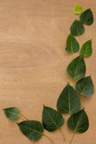 Leaves, wood, texture, leaf green, brown ground. Royalty Free Stock Photography