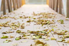 Leaves on wood way Royalty Free Stock Photos