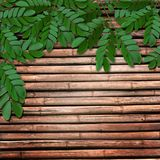 Leaves on wooden background Stock Images