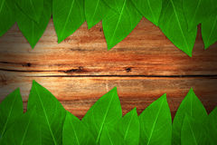 Leaves on wooden board. Fresh leaves on wooden board Royalty Free Stock Photos