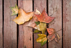 Leaves on wooden floor Stock Images