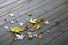 Leaves on the wooden floor Royalty Free Stock Photo