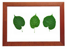Leaves in wooden frame Stock Photo