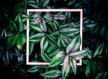Leaves and wooden frames of background. Leaves and wooden frames of the background royalty free stock image