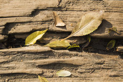 Leaves wooden sleeper Royalty Free Stock Image