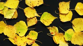 Leaves stock video footage