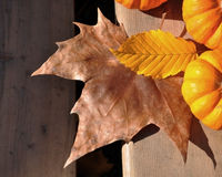 Leaves yellow and brown with pumpkins Royalty Free Stock Photography