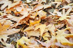 Leaves. Yellow leaves resting on the floor Royalty Free Stock Photos