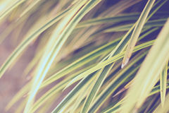 Leaves yellowish green close up Royalty Free Stock Photos