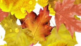 leavesfalling的秋天,无缝的圈 库存例证