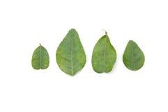 leaveslimefrukt Royaltyfri Foto