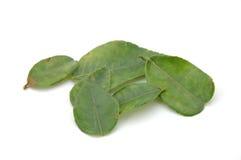 leaveslimefrukt Royaltyfri Bild