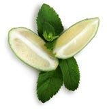 leaveslimefruktmint royaltyfri bild