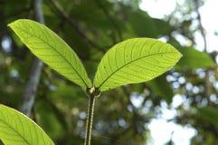 leavespar royaltyfria foton