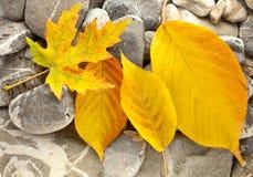 leavesstenar Royaltyfria Bilder