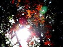 leavessun Stock Image