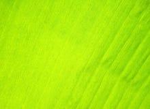 leavestextur Arkivfoton