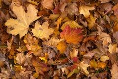 leavestextur Royaltyfri Fotografi