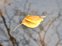 leavesvatten Arkivbilder