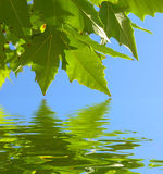leavesvatten Arkivfoto