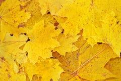 leavesyellow Arkivfoton