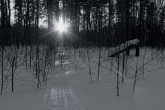 On leaving the forest. The light from the sun gently highlighting the contours of the trees, leaving a shadow on the snow Royalty Free Stock Image