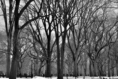 Leavless树在中央公园 免版税库存照片