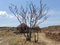 Leavless träd fotografering för bildbyråer