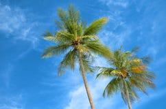 Ладони кокосов Стоковое Изображение